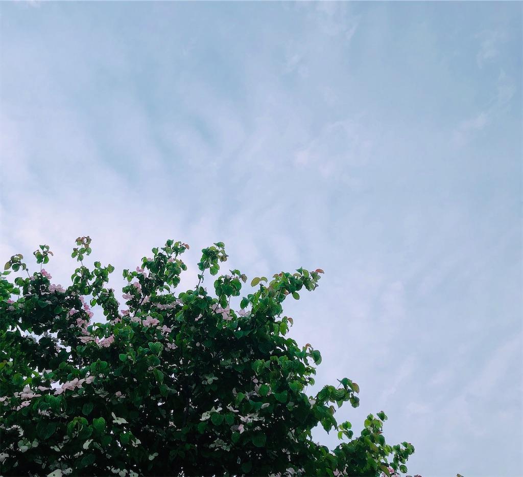 f:id:wagashi-okeya:20200526214510j:image