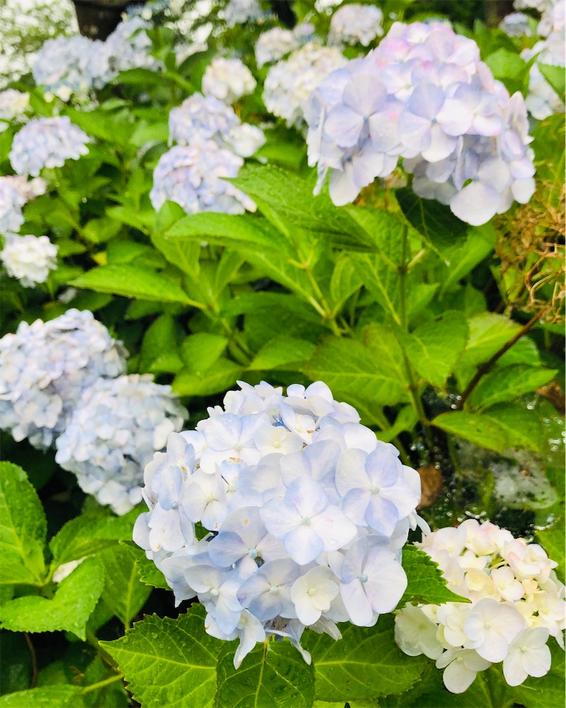 f:id:wagashi-okeya:20200620163214j:image