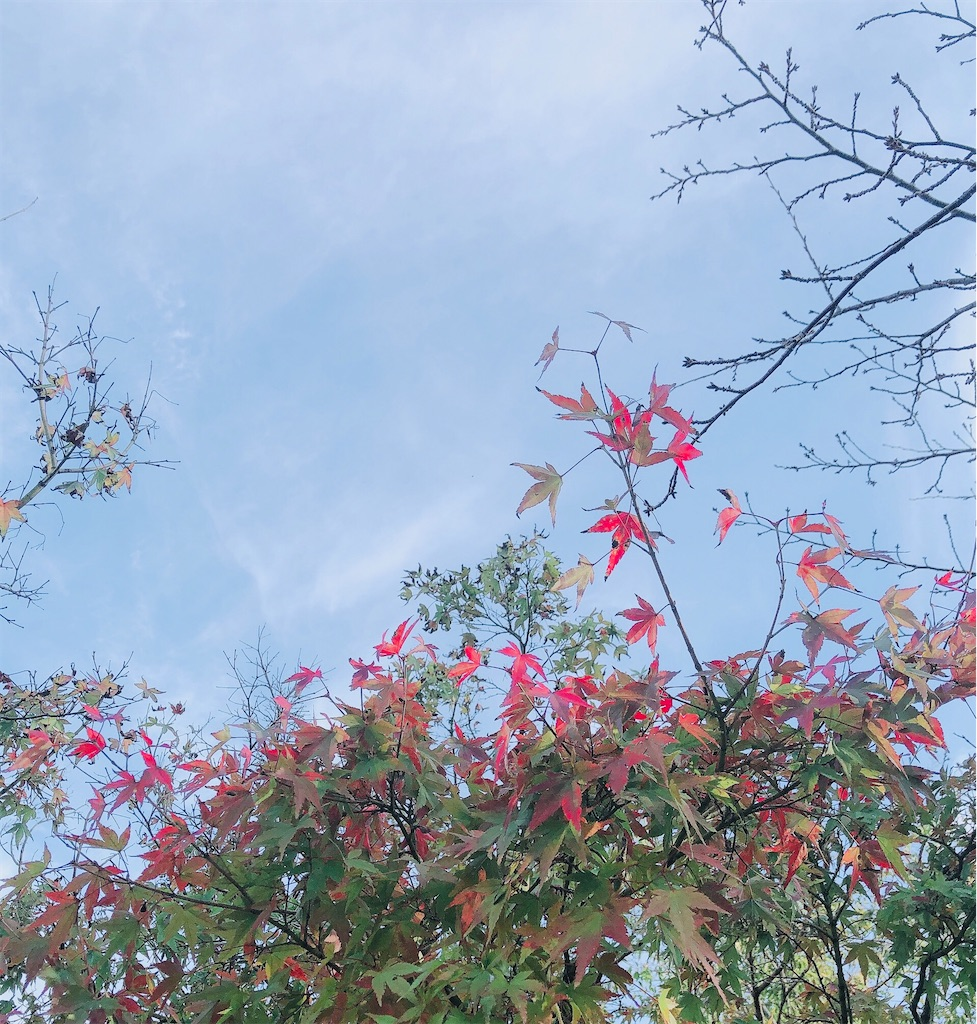 f:id:wagashi-okeya:20201031113236j:image