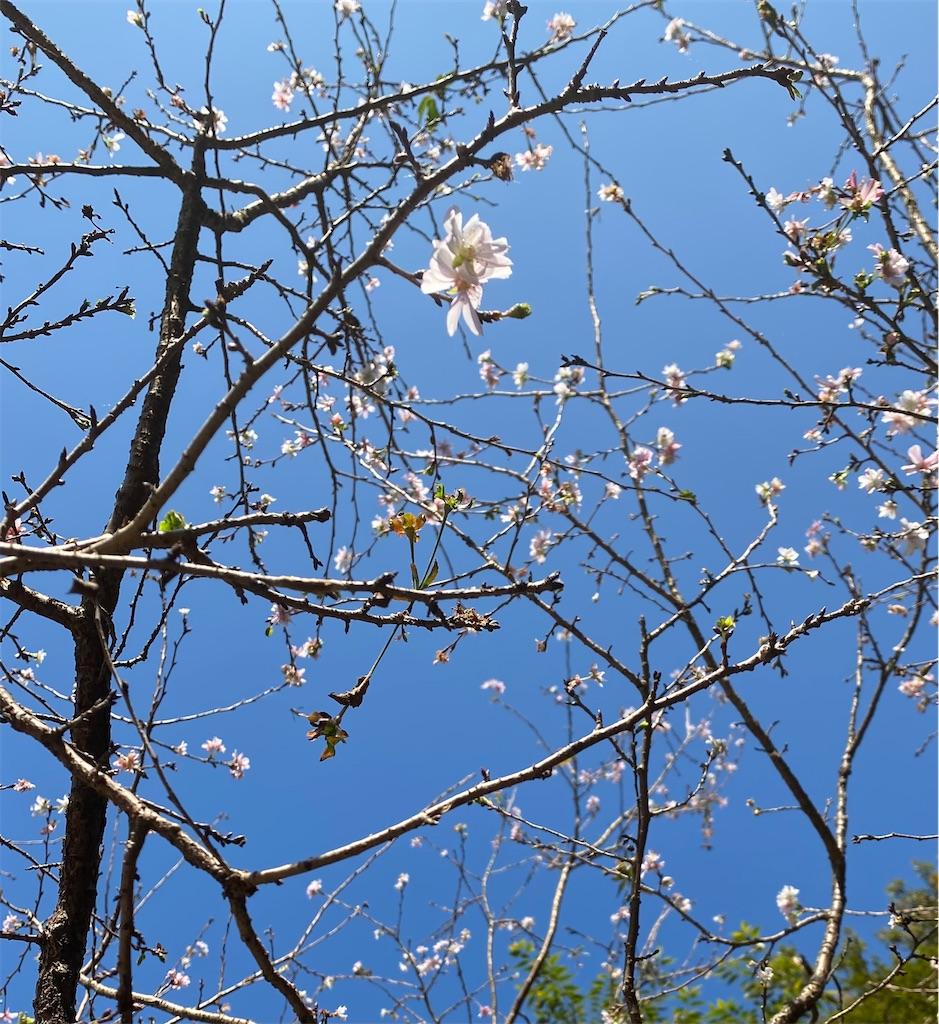 f:id:wagashi-okeya:20201116231610j:image