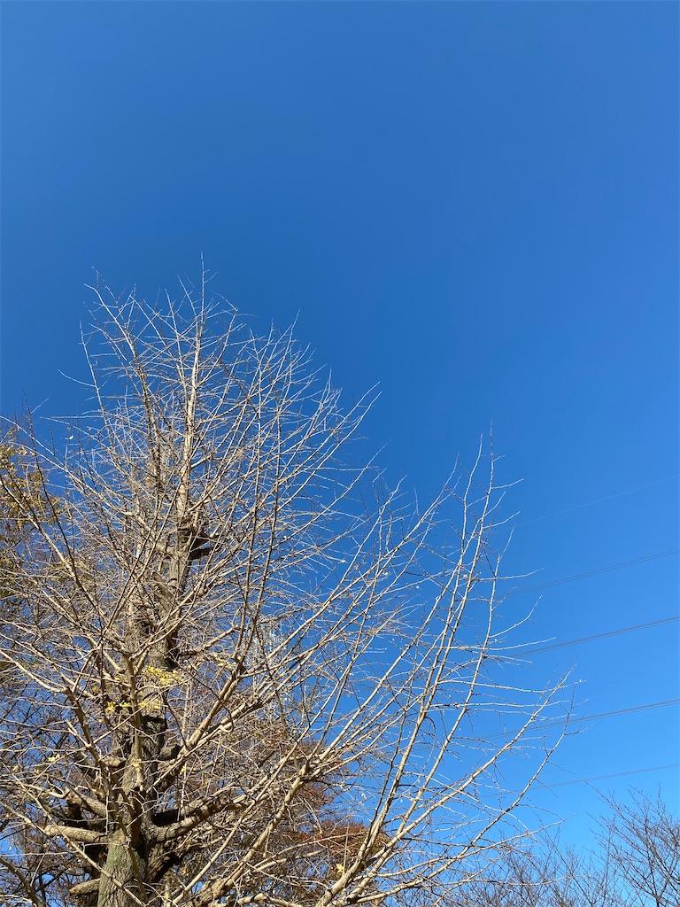 f:id:wagashi-okeya:20201123154001j:image