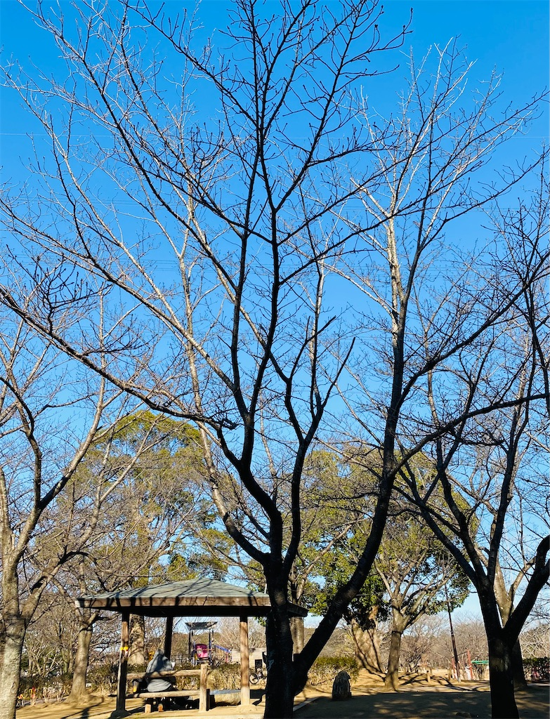 f:id:wagashi-okeya:20210202225751j:image