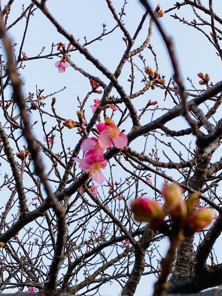 f:id:wagashi-okeya:20210214111855j:image