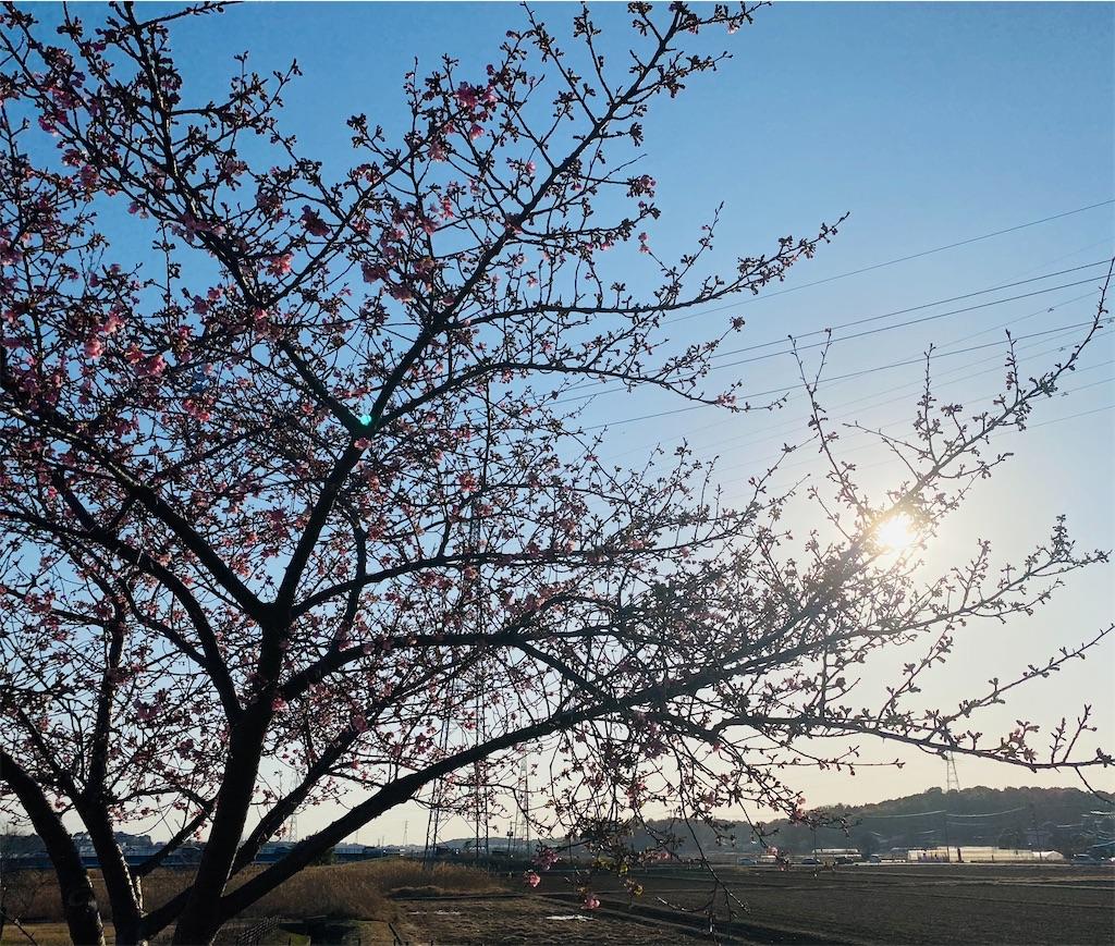 f:id:wagashi-okeya:20210301232407j:image