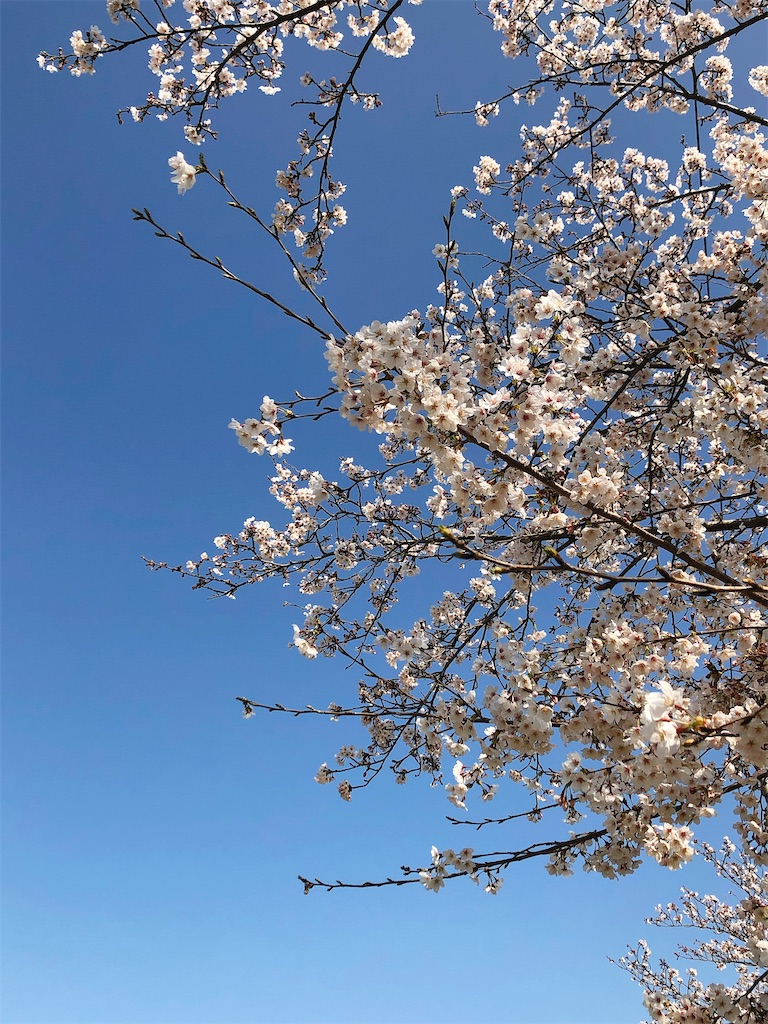 f:id:wagashi-okeya:20210301235257j:image