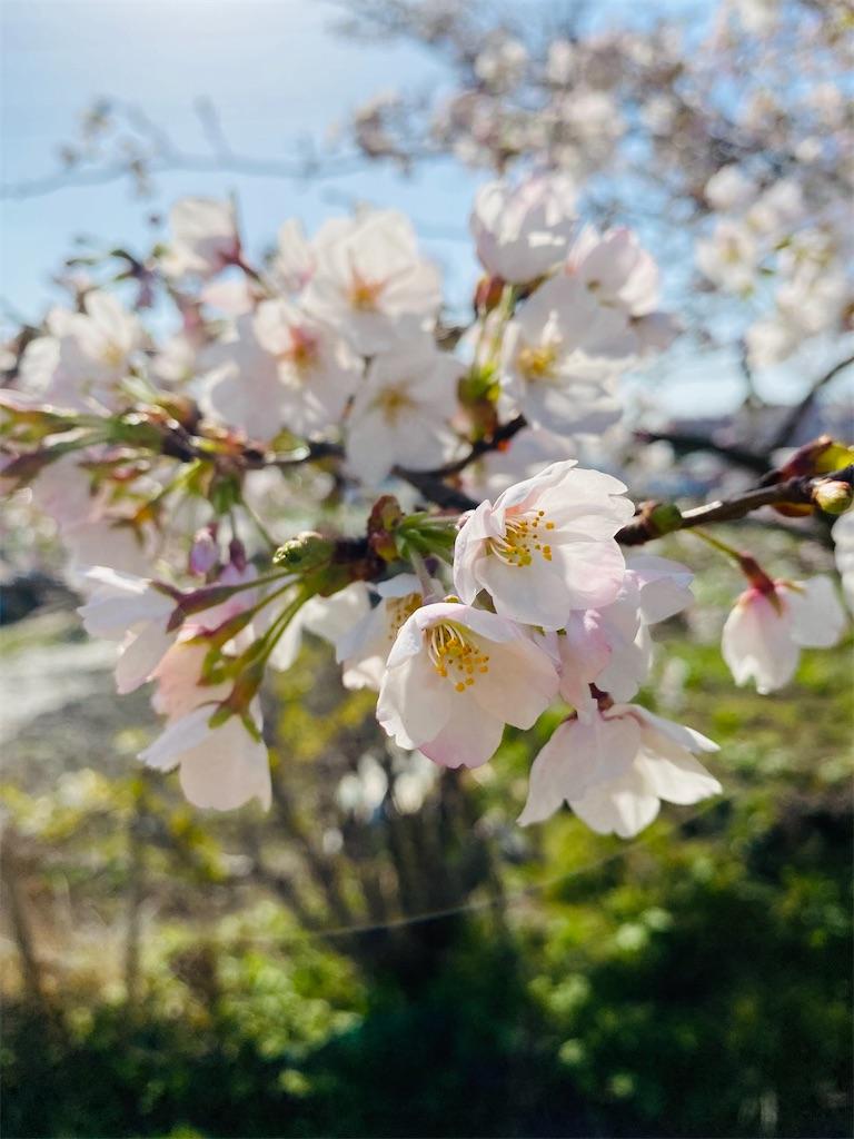 f:id:wagashi-okeya:20210326230810j:image