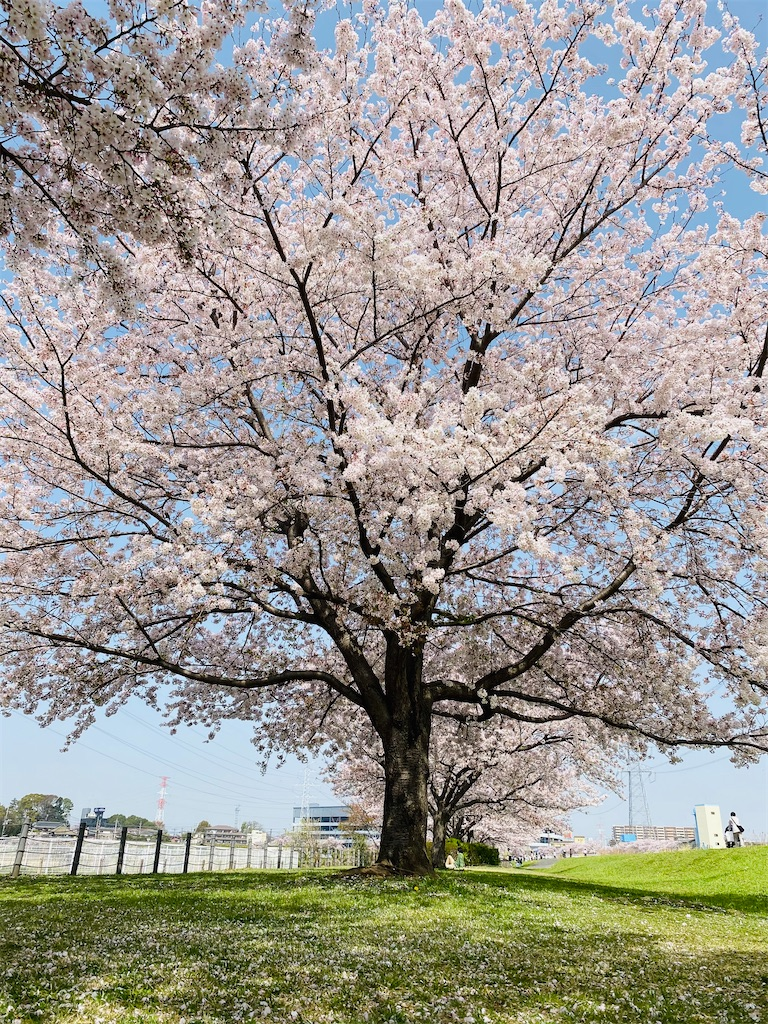 f:id:wagashi-okeya:20210404231814j:image