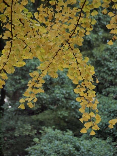 f:id:wagonlife:20101121155441j:image