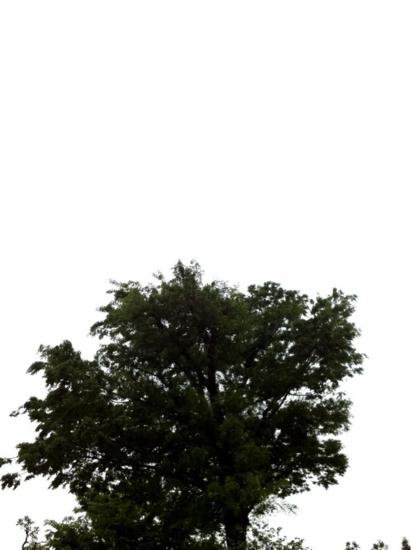 f:id:wagonlife:20110513091217j:image