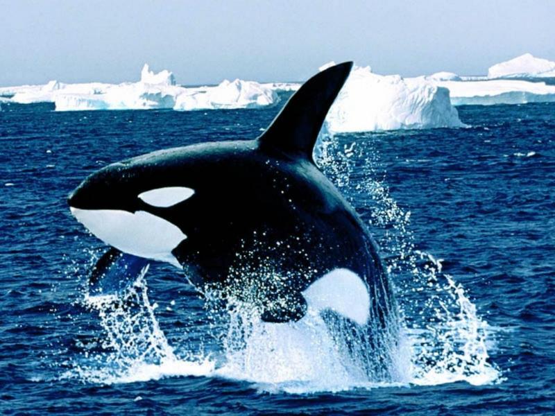 海 の ギャング 海のギャングスター!?「ウツボ」を釣って食す|BE-PAL