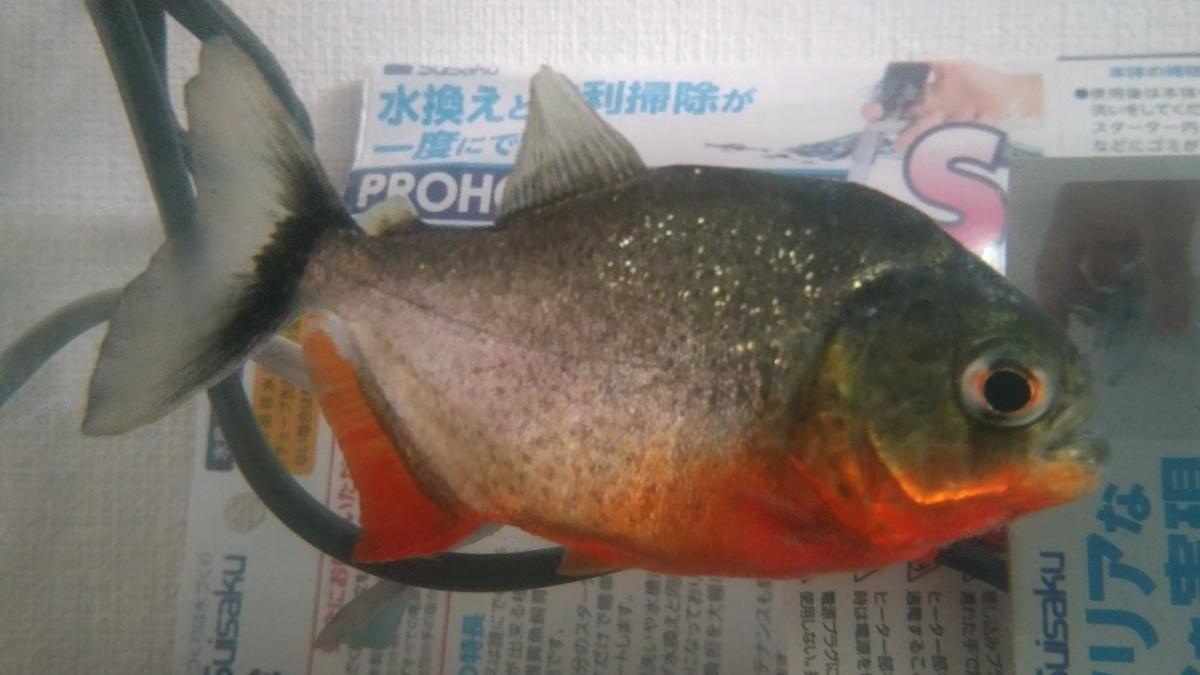 f:id:wakakiyo1188:20190618185105j:plain
