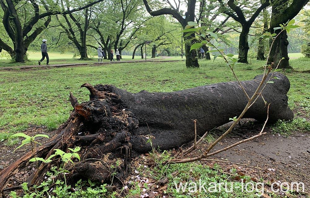 f:id:wakaru-web:20200607211908j:plain