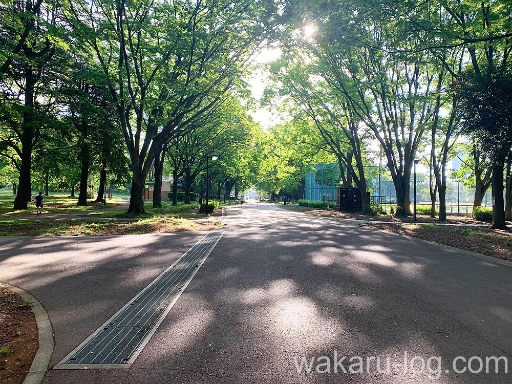 f:id:wakaru-web:20200608084735j:plain