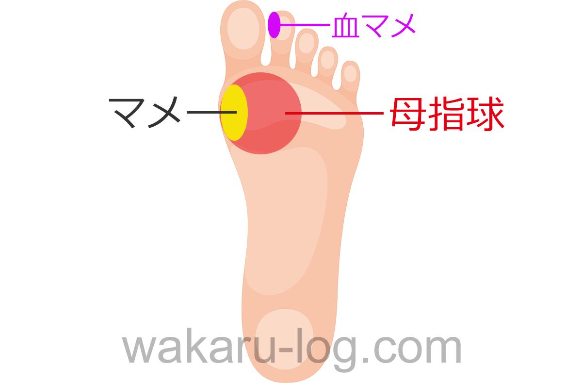 f:id:wakaru-web:20200902151123p:plain
