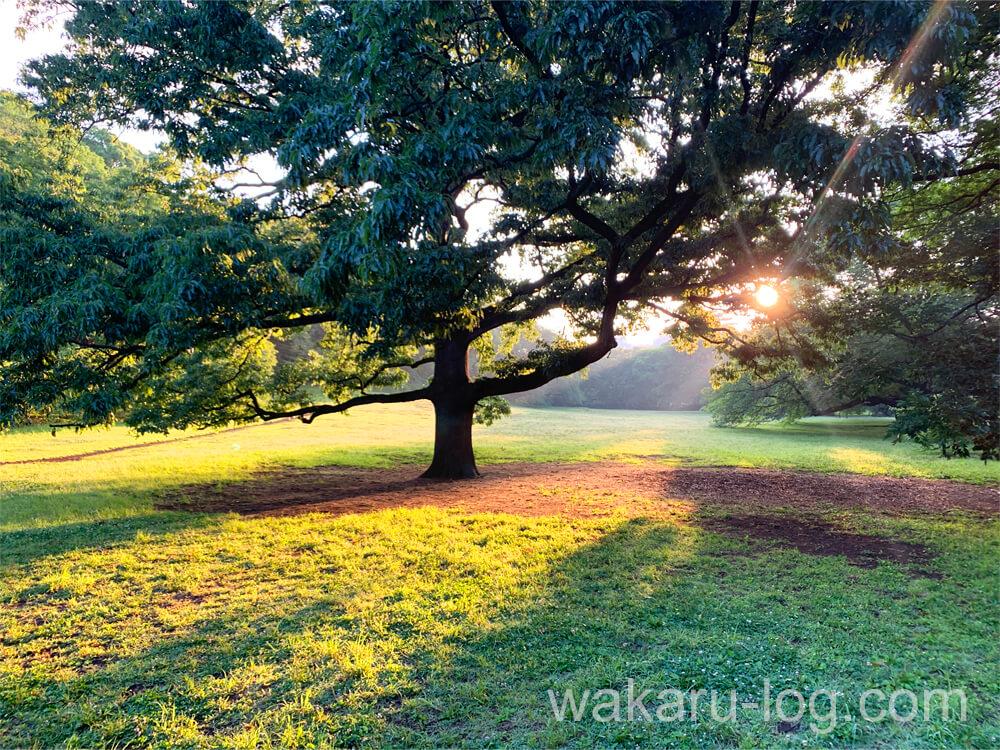 f:id:wakaru-web:20211002154616j:plain