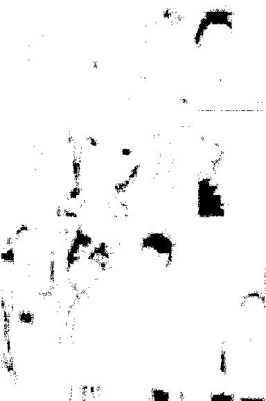 f:id:wakax2:20170505185554p:plain