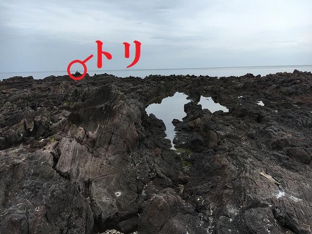 f:id:wakax2:20170519043027j:plain