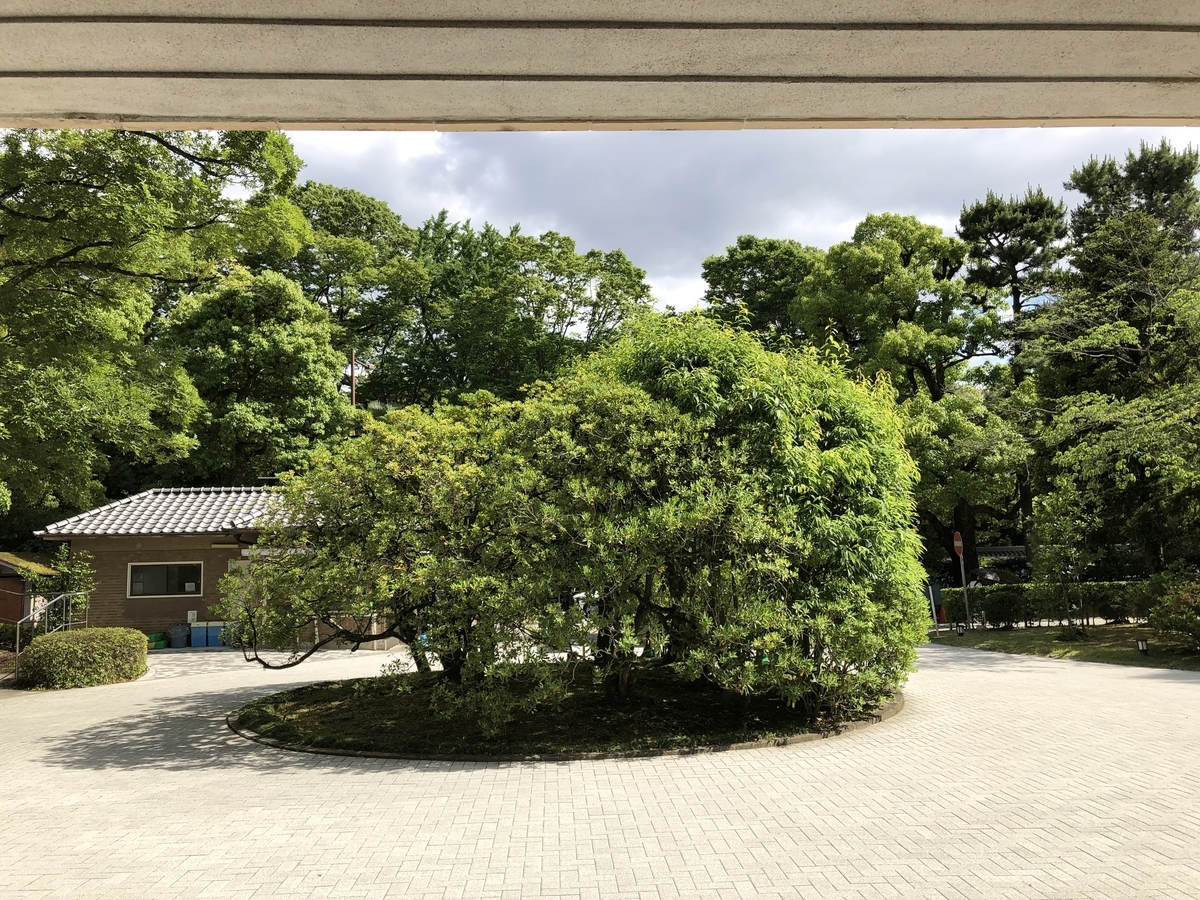 f:id:wakazemi:20190617145912j:plain