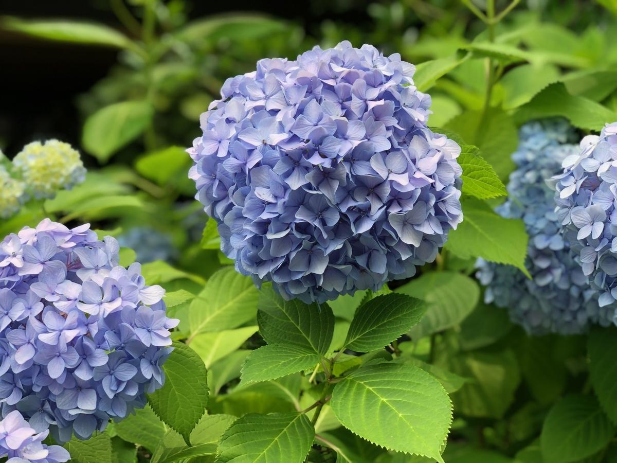 f:id:wakazemi:20190619125505j:plain