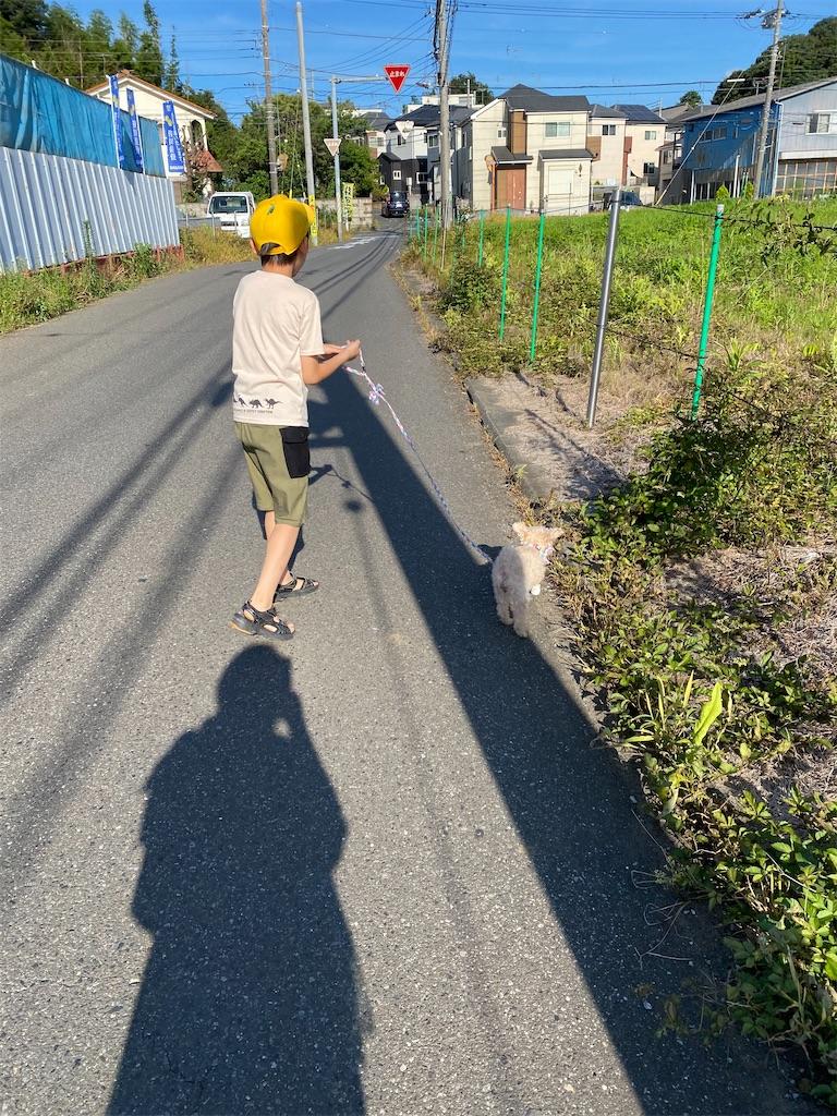 f:id:wakutera:20200802215844j:image