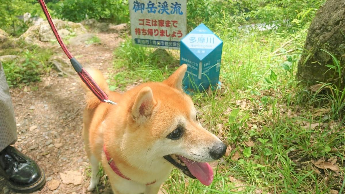 f:id:wakuwaku-blue:20190505164004j:plain