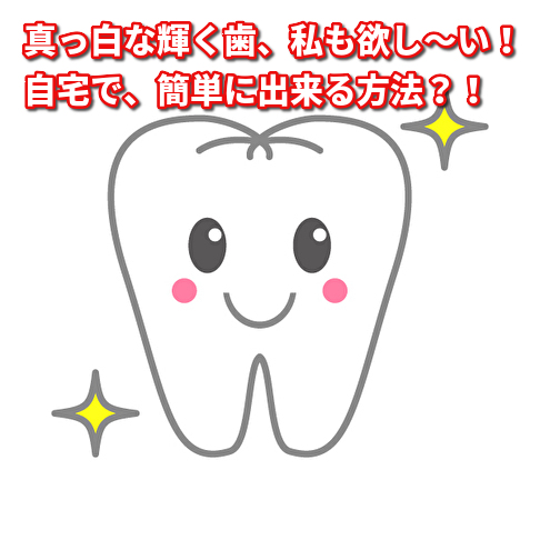 f:id:wakuwaku-ny:20190817102726j:plain