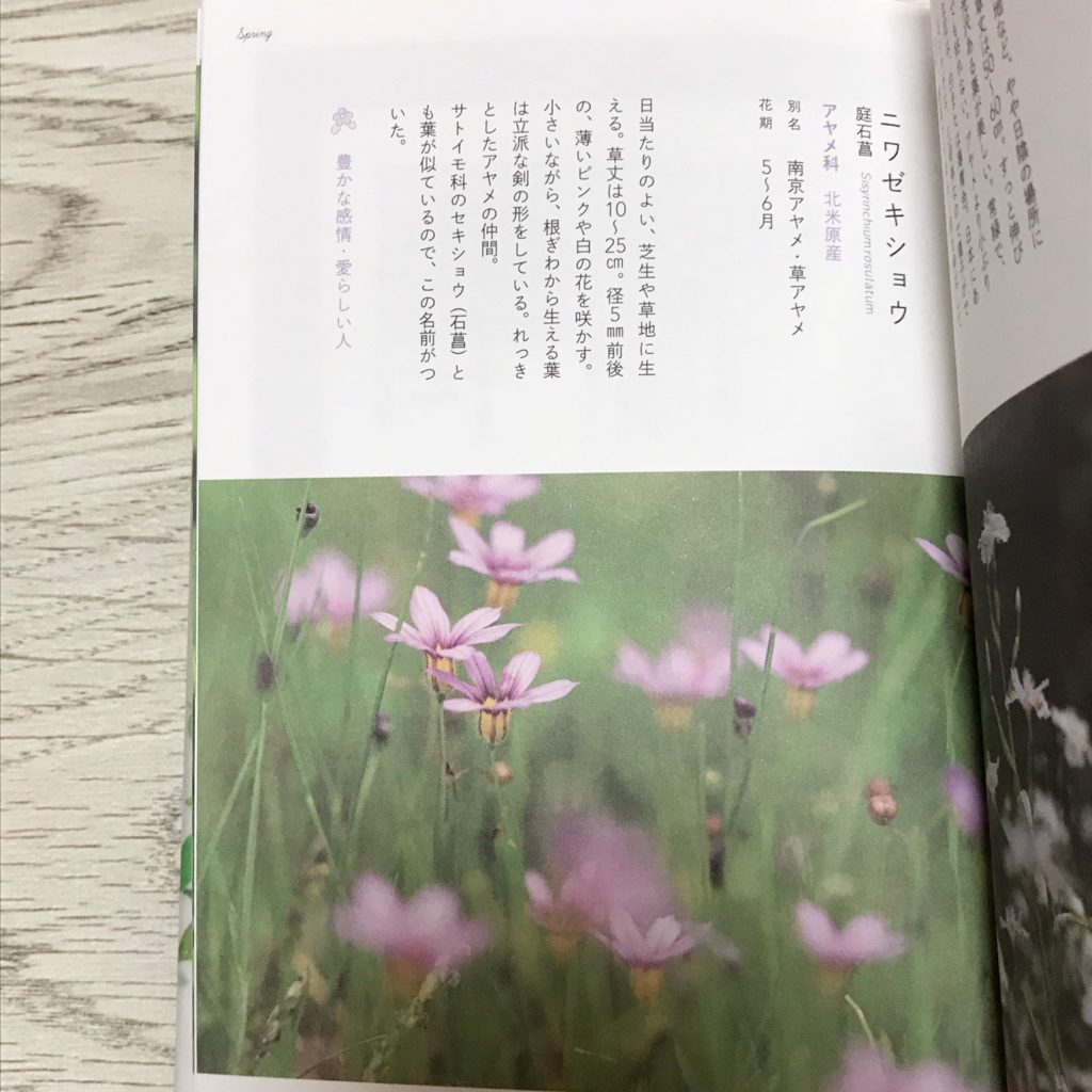 f:id:wakuwaku-v:20180904125027j:plain