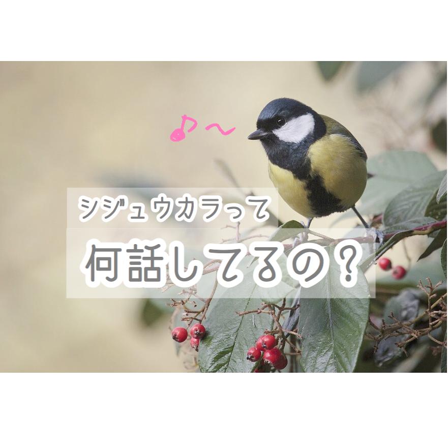 f:id:wakuwaku-v:20180907112914p:plain