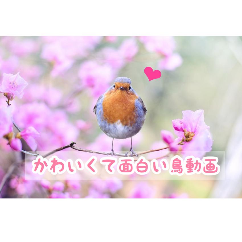 f:id:wakuwaku-v:20180907122606p:plain