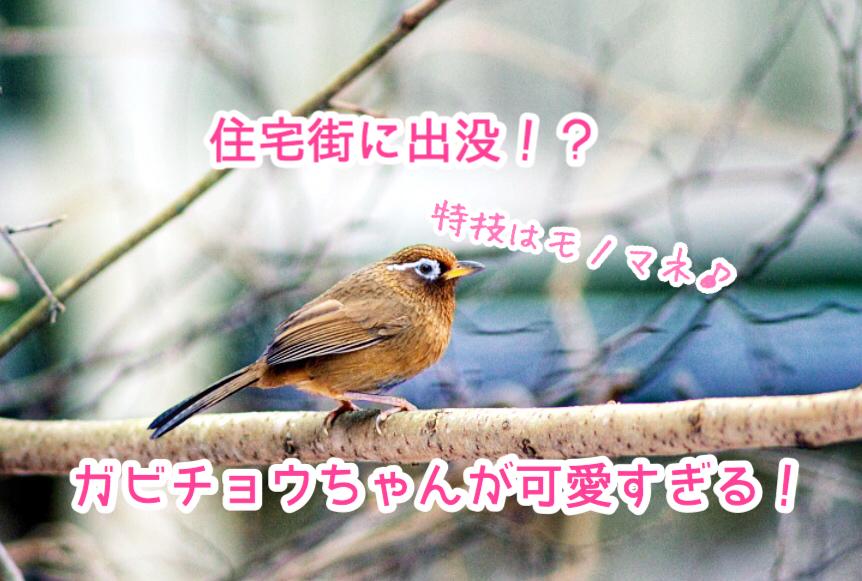 f:id:wakuwaku-v:20180928181849p:plain