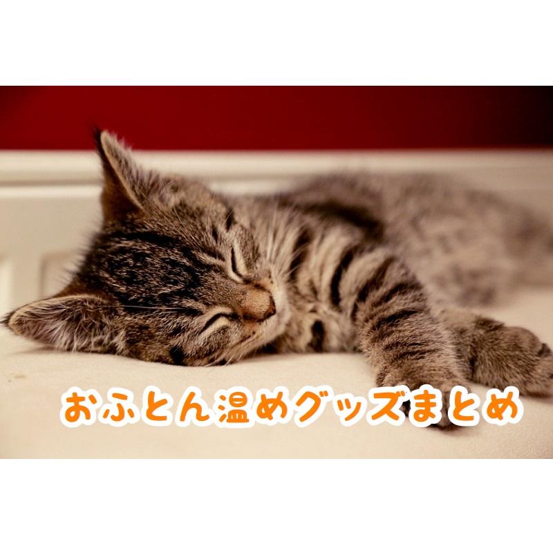 f:id:wakuwaku-v:20190111182822p:plain