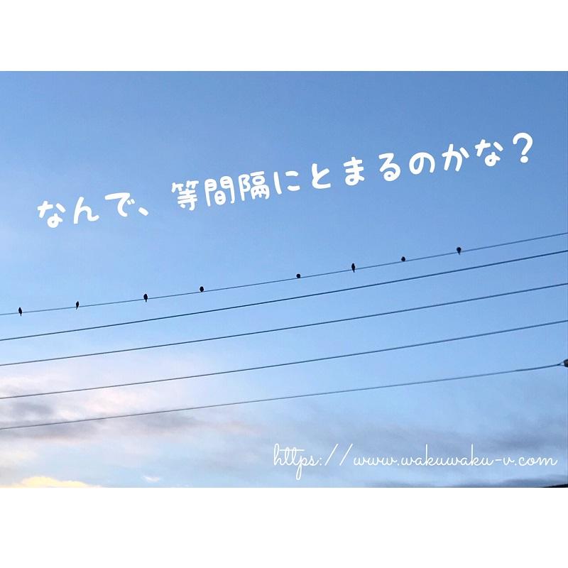 f:id:wakuwaku-v:20190124141624j:plain