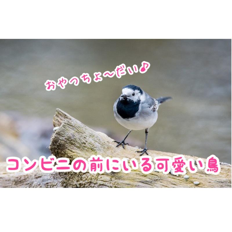 f:id:wakuwaku-v:20190228174332j:plain