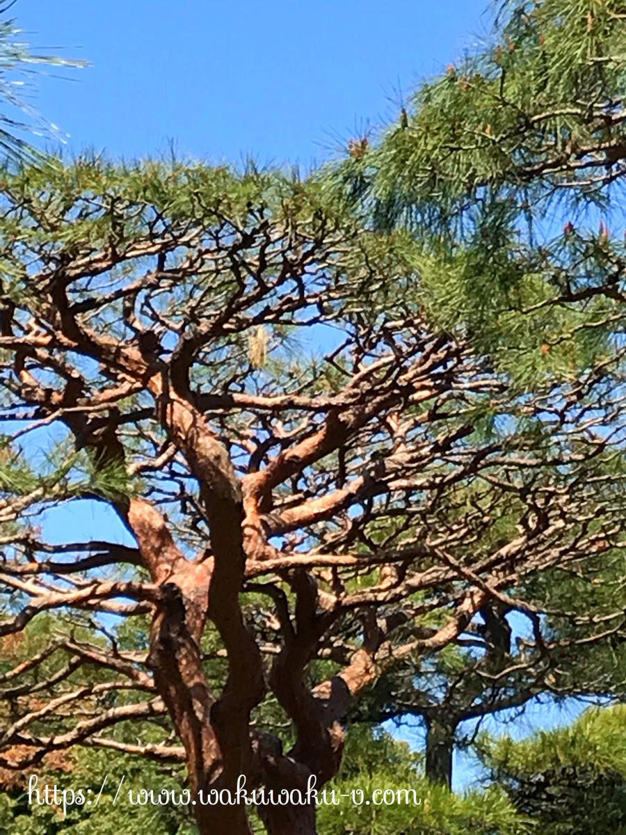 日比谷公園 バードウォッチング 初心者 鳥 種類 シジュウカラ