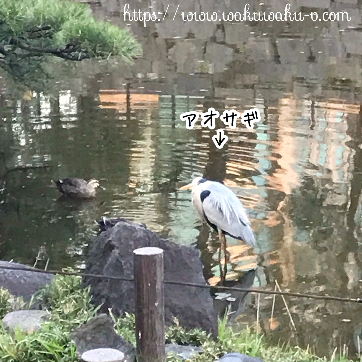 f:id:wakuwaku-v:20190326145153j:plain