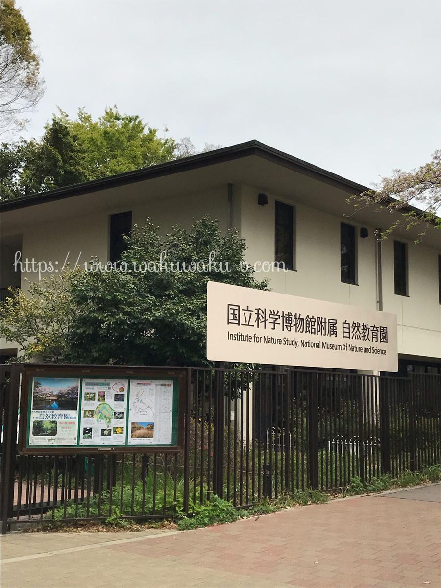 目黒教育自然公園 バードウォッチング 初心者