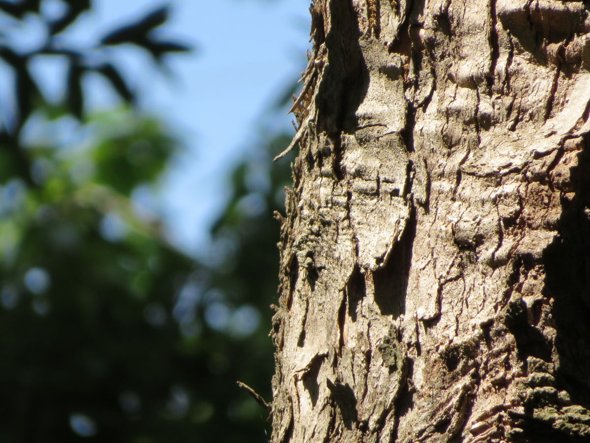 SX720SH レビュー  画質 撮影写真 野鳥 口コミ ブログ デジカメ おすすめ