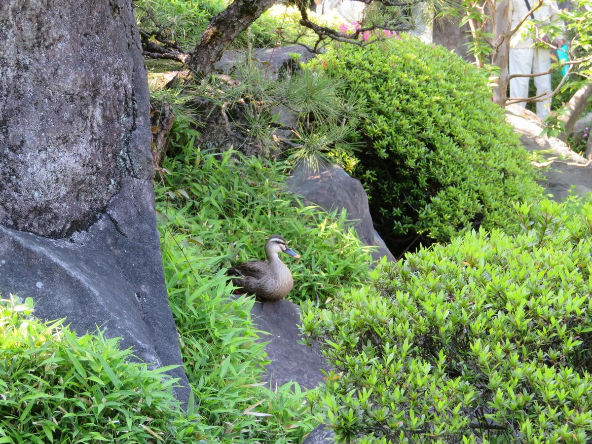 目白庭園 一人 都内 落ち着く場所 公園 女 癒される