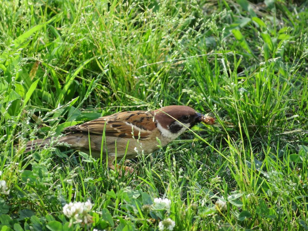 SX720 レビュー 野鳥 写真