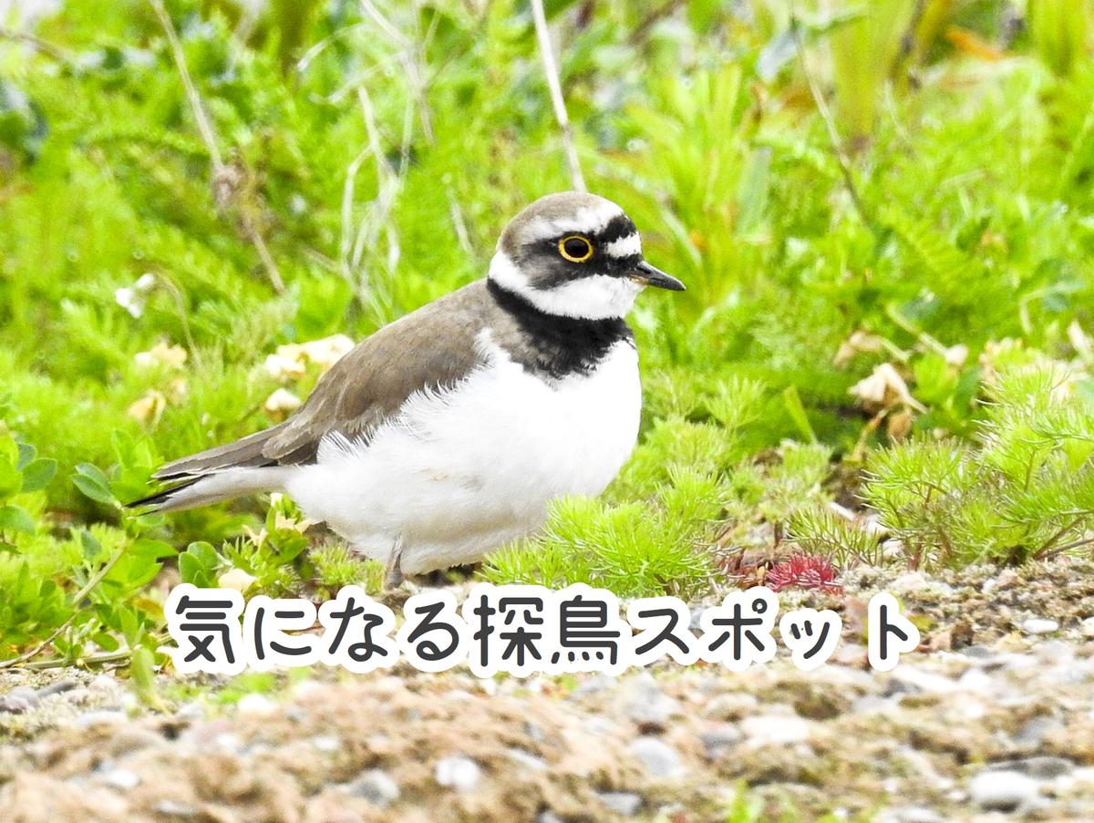 都内 野鳥 おすすめ 探鳥スポット 公園 バードウォッチング