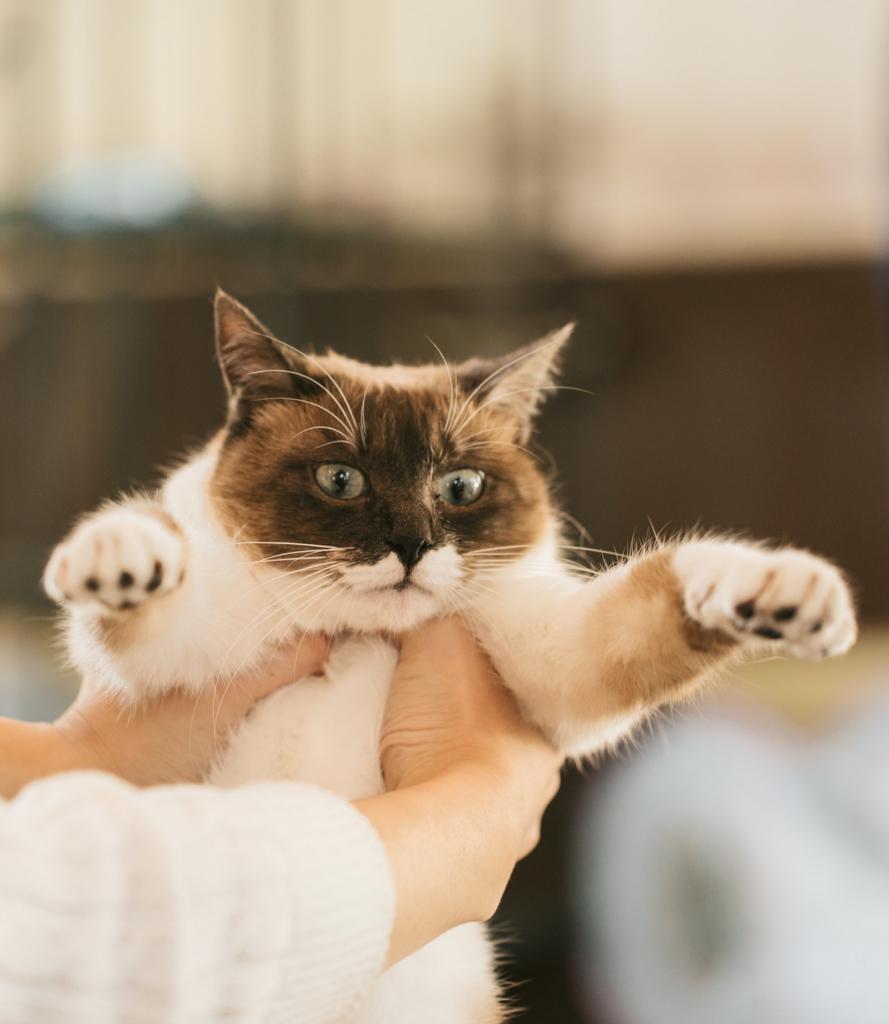 """<img src=""""猫""""alt=猫 締め出し イメージ>"""