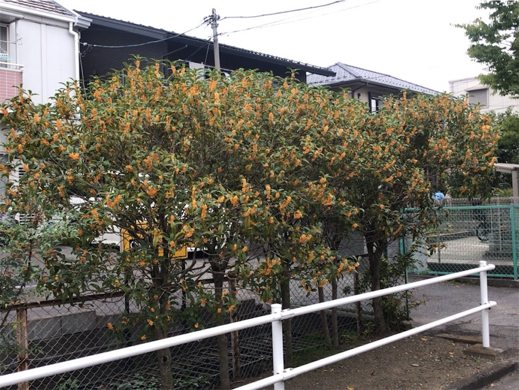 f:id:wakuwakushincha:20201026211944j:image