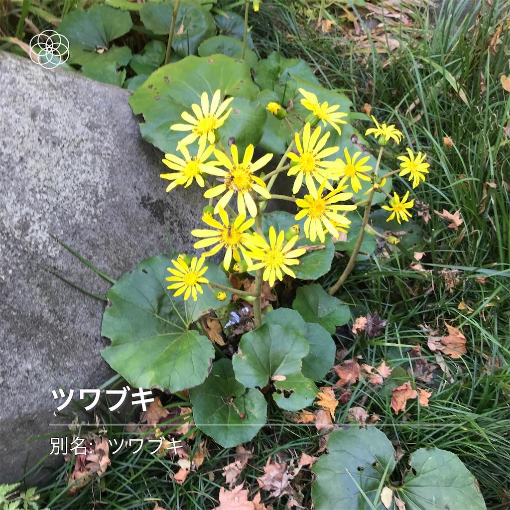 f:id:wakuwakushincha:20201031201557j:image