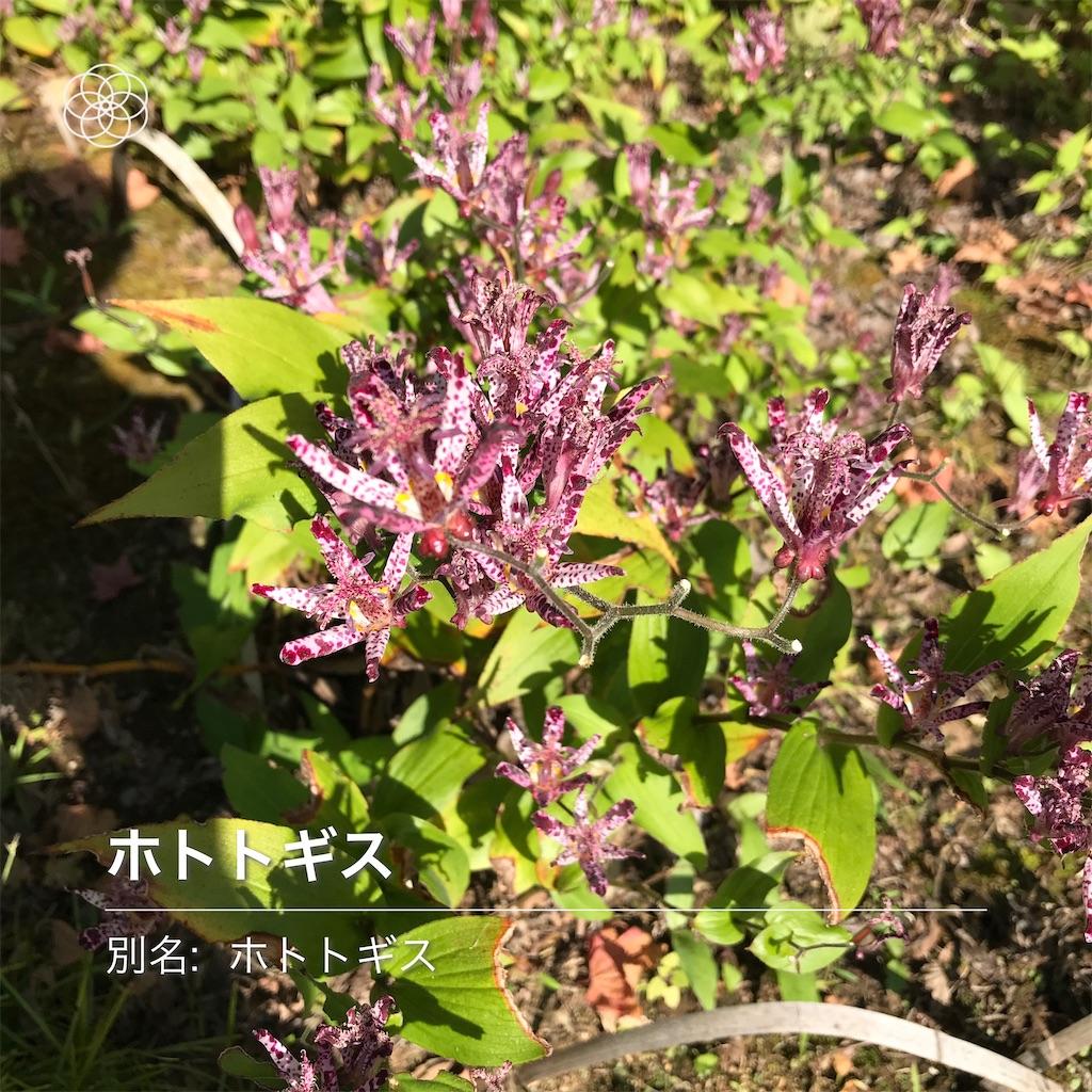 f:id:wakuwakushincha:20201031201600j:image