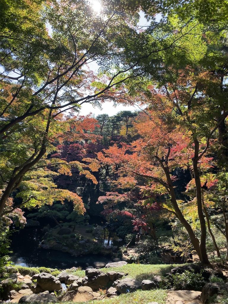 f:id:wakuwakushincha:20201114194246j:image