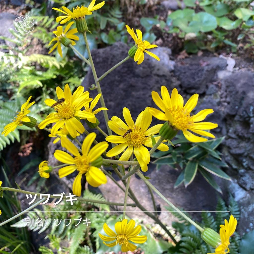f:id:wakuwakushincha:20201114200003j:image