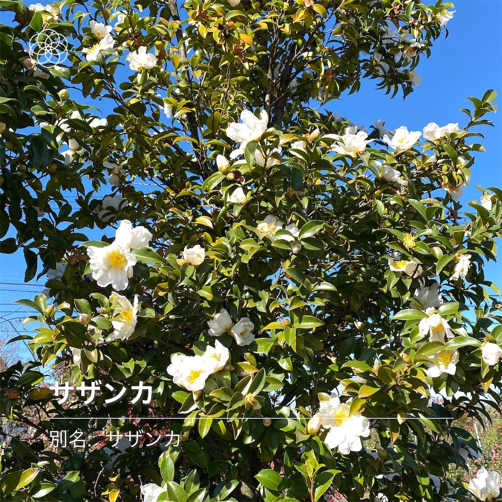 f:id:wakuwakushincha:20201121201146j:image