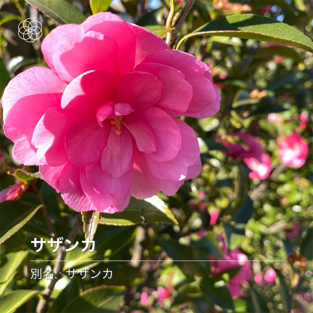 f:id:wakuwakushincha:20201121201233j:image