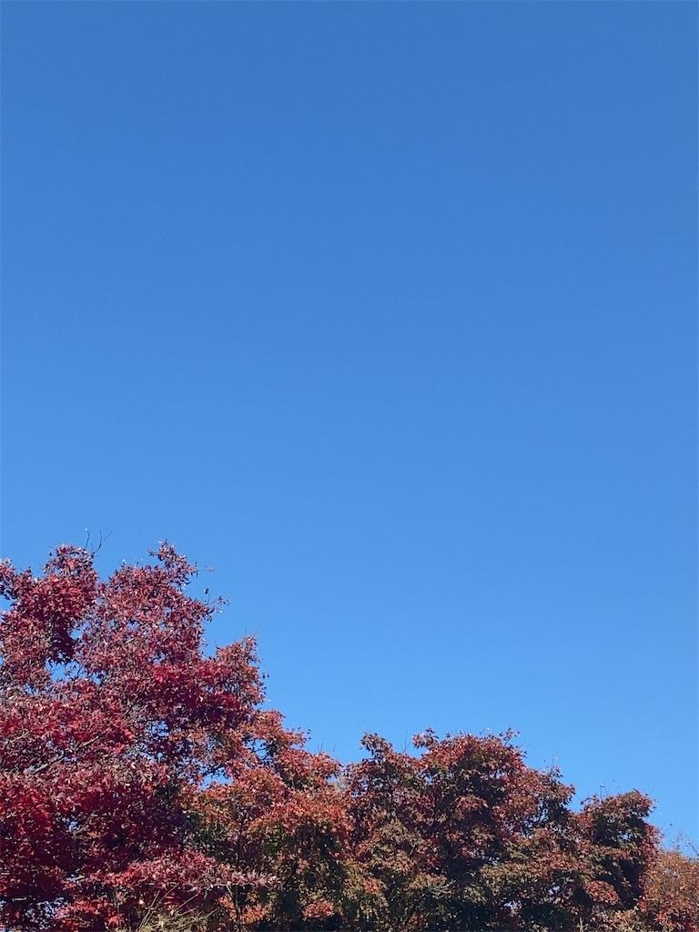 f:id:wakuwakushincha:20201123120411j:image