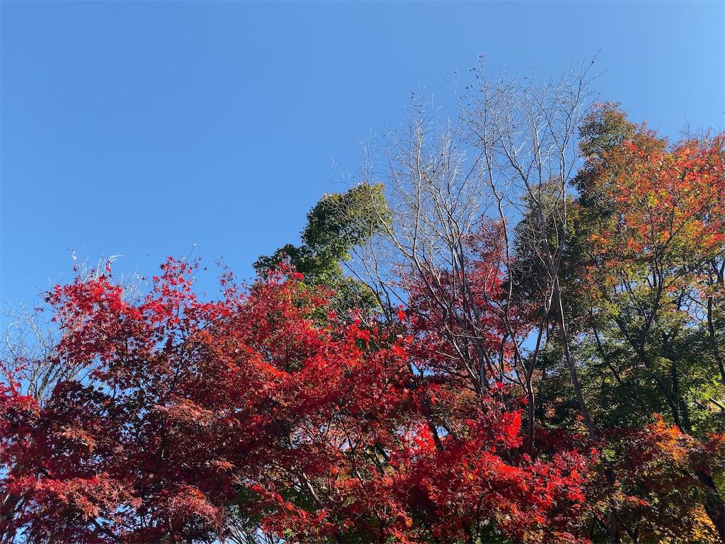 f:id:wakuwakushincha:20201123132258j:image